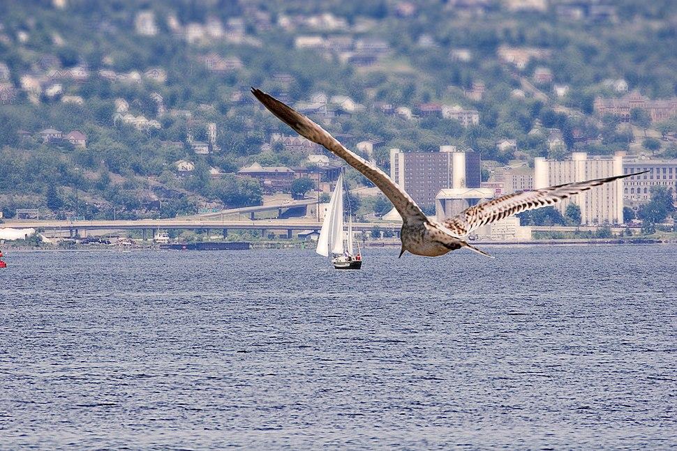 Gull-Duluth-Superior