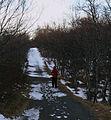 Höfði nature park.jpg