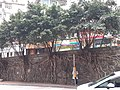 HK ML 西半山 Mid-Levels West 般咸道 Bonham Road 8th January 2021 SS2 11.jpg