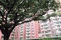 HK SMP 秀茂坪邨 Sau Mau Ping Estate Campion tree silk July 2018 IX2 (2).jpg