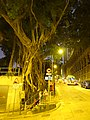 HK Sai Ying Pun 東邊街 Eastern Street night High Street banyan tree Jan-2016 DSC.JPG