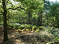 Hambach forest 35.jpg