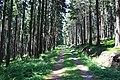 Harzwanderung Oberharz um Braunlage - Wurmberg - Weg nach Braunlage -Wurmberg - panoramio (2).jpg