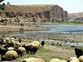 Hasankeyf-Tigris and sheep.jpeg