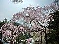Hasedera Temple 長谷寺 - panoramio (3).jpg