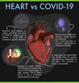 Heart vs covid19.png