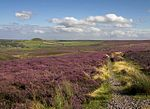 Heather moorland on the North York Moors.jpg