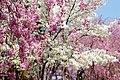 Heian Jingu Garden (3484422057).jpg
