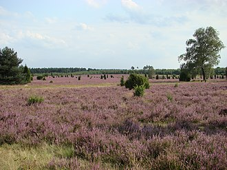Geography of Germany - The Lüneburg Heath Nature Reserve in Lower Saxony