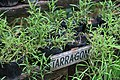 Herbs at Bohol Bee Farm f.jpg