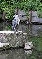 Heron Hyde Park 1 (2733714934).jpg