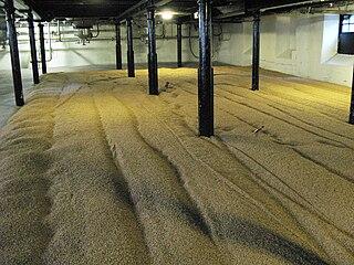 Malting process which converts raw grain into malt