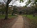 Hikone catle , 彦根城 - panoramio (3).jpg