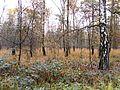 Hildener Heide.jpg