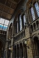 Hintze Hall Natural History Museum 4.jpg