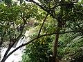 Hinulugang Taktak topview.jpg