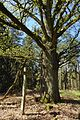 Hirschgehege im Forst Rundshorn-Fuhrberg 04.jpg