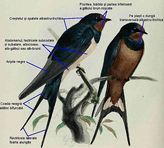 pierderea în greutate a cuibului de păsări