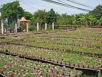 Sa Đéc - Sa Đéc Flower Village