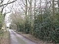 Holly thickets below oak, Kite's Nest Lane - geograph.org.uk - 1769616.jpg