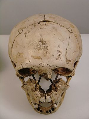 Gibraltar 2 - Image: Homo neanderthalensis face top (University of Zurich)