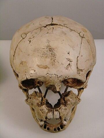 Cráneo de niño Neanderthal procedente de Gibraltar