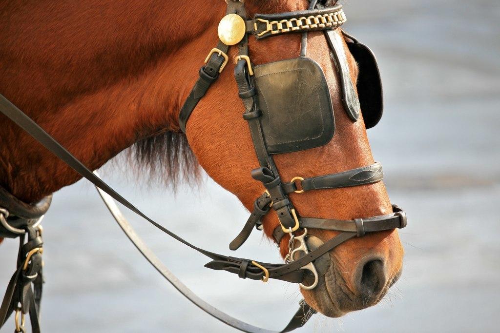 Horse Blinkers (4240744343)