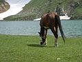 Horse at dudipatsar lake.jpg