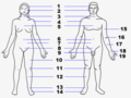 Human body features2.png