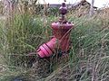 Hydrant ribe 5.JPG