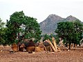 INHABITANT-FULANI VILLAGE IN FALGORE FOREST KANO STATE.jpg
