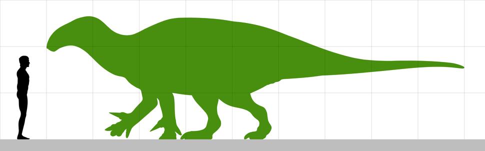Iguanacolossus size