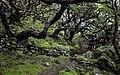 Ilha das Flores P5260048 (35877062521).jpg