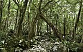 Ilha das Flores P5270204 (35170623984).jpg