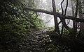 Ilha das Flores P5290326 (35621061980).jpg