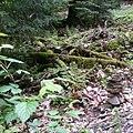 Im Naturschutzgebiet Eiterbachtal.jpg