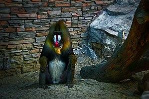 Novosibirsk Zoo - Image: Im watching you (5847194561)