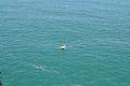 Indian Ocean 15.jpg