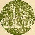 Indian myth and legend (1913) (14597524568).jpg