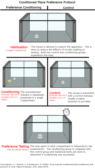 Conditioned place preference - Conditioned place preference protocol
