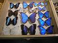 Insect Safari - lepidopteran 113.jpg