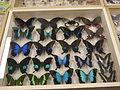 Insect Safari - lepidopteran 115.jpg