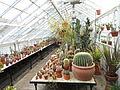 Interior view - Talcott Greenhouse - Mount Holyoke College - DSC04543.JPG