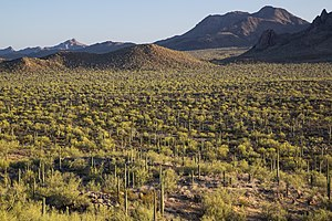 Ironwood Forest National Monument 2016 1.jpg