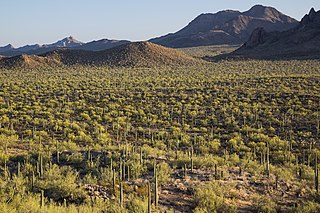 national monument in the Sonoran Desert of Arizona