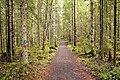 Isojärvi National Park - trail.jpg