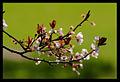 Its Spring (1405840993).jpg