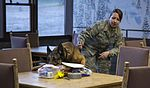 JBER military working dog teams hone their capabilities during annual certification 161014-F-YH552-002.jpg