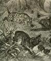 Jaguarandtapirs.png