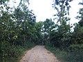 Jalan Desa Bandungrejo, Bantur, Malang (masih makadam) - panoramio.jpg